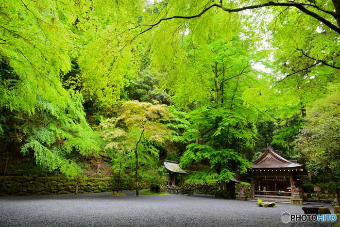 貴船神社は秋の紅葉がとても有名ですが「青もみじ」も引けを取らないほど美しく壮大な新緑を楽しむことができます。 もちろん晴れた日の光り輝く緑も素敵ですが、曇りや雨の日にしか見ることができない、どこまでも続いていく深い緑は、樹々の力強さやパワーが感じられ、体の中からそれが満ち溢れてくるようです。