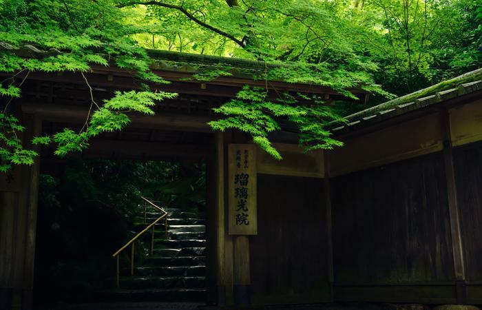 京都の八瀬大原エリアにあり、比叡山の山麓に位置する「瑠璃光院」では、市内でありながらも都会の喧騒から離れた自然豊かな景色を楽しむことができます。普段は非公開となっていますが、春と秋にのみ公開されるようになり、新緑の名所として多くの人から親しまれています。