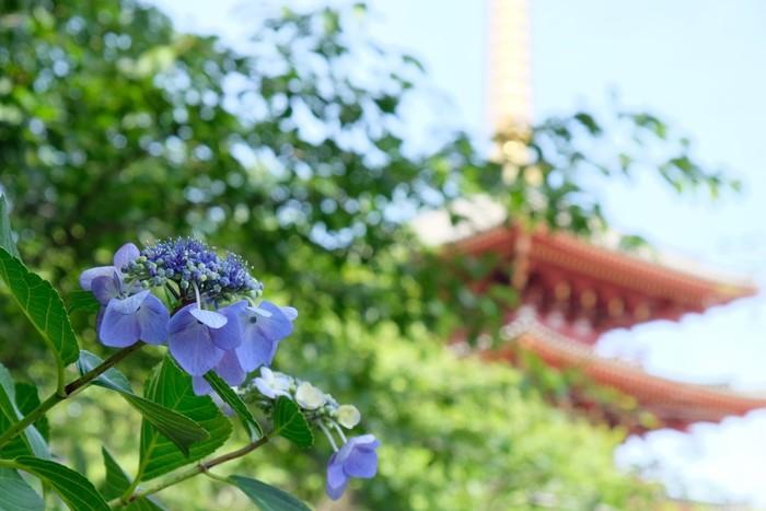 毎年6月に「あじさいまつり」が開催されており、境内から山にかけて咲く約200種類以上の紫陽花を楽しむことができます。貴重な文化財も多くあり、都内にいながらも落ち着いた厳かな雰囲気を感じられる場所です。