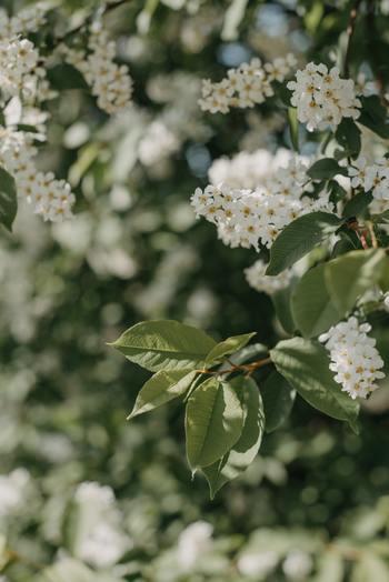 そんな気分の時は部屋にこもりがち。けれど、外に出て自然に目をやると花や木々が生き生きとして、「初夏」を迎えたことに気づくでしょう。
