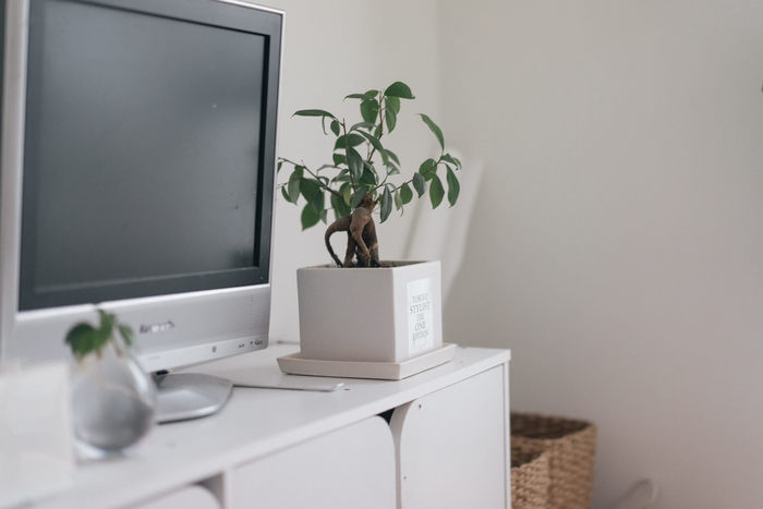 どんな色にもマッチする白は、住まいのベースカラーにぴったり。こちらのお宅のように、壁や家具など白を基調にしたなかに、インテリアグリーンを取り入れるとみずみずしさがプラスされ心地良い空間に仕上がります。
