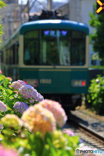 いかがだったでしょうか?6月は梅雨なので雨も多い季節になります。いつもなら憂鬱に感じがちな雨ですが、雨に濡れて美しさを倍増させた紫陽花見物もなかなかオツですよ。季節の移り変わりを感じることができる鎌倉散策、美味しいコーヒーと共に満喫してくださいね。