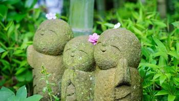 この時期の長谷寺は平日でもとても賑わっています。拝観まで整理券が発行されることもしばしば。待つのも楽しみの一つと捉えてのんびり気分で足を運んでみてくださいね。