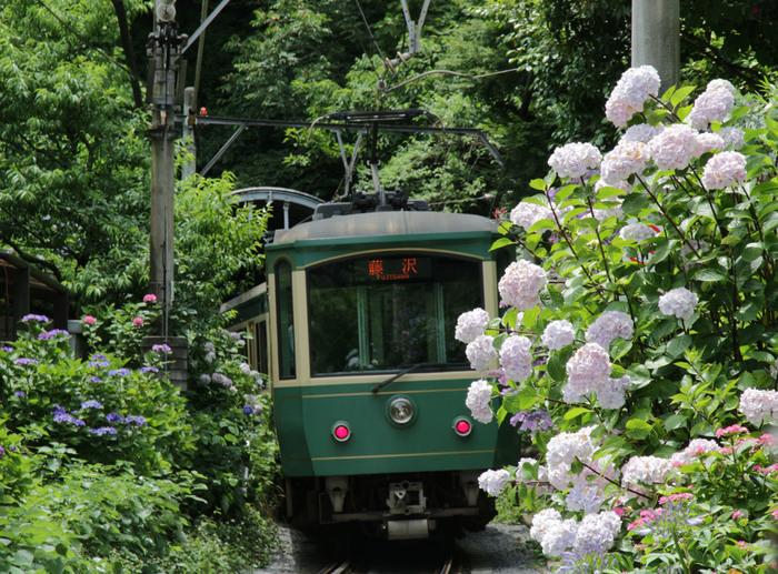 鎌倉を走る江ノ電と紫陽花を一緒に撮れるスポットでもお馴染みの御霊神社は、このシーズン人で溢れています。お気に入りの一枚を狙ってシャッターを切ってみてくださいね。