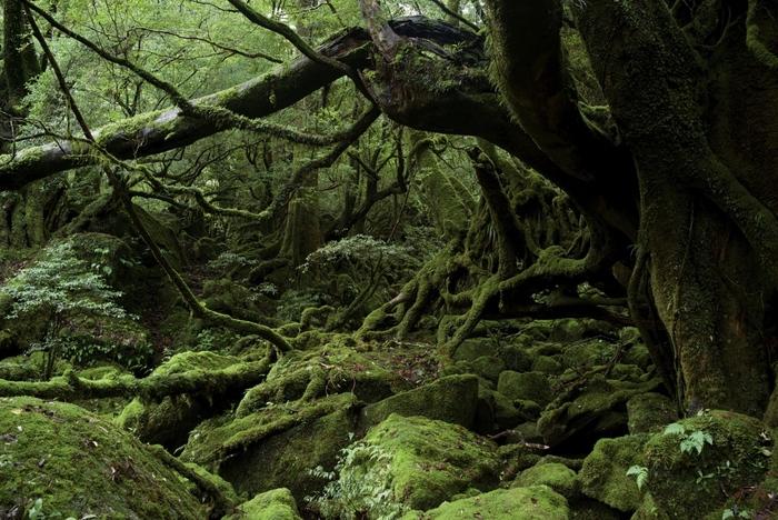 パワースポットと言う言葉を聞くようになった頃から、注目され続けている「屋久島」。 島の90%以上が森林で、今でも太古から変わらぬ美しい自然が残っているいといわれています。島全体がパワースポットと言っても過言ではない屋久島。一度は足を踏み入れてみたい場所ですよね。