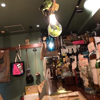 5坪ほどの小さなお店には雑貨やお酒のボトル、店主直筆のポップがぎっしり。Free-WiFiとコンセントがあるのも密かなポイントです。