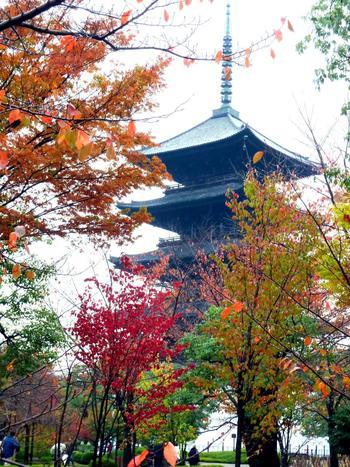 木造の建築物として日本一の高さを誇る五重塔。その高さは約55mだと言われています。  夜になるとライトアップされる季節もあり、昼とはまた違う荘厳な美しさを楽しめます。