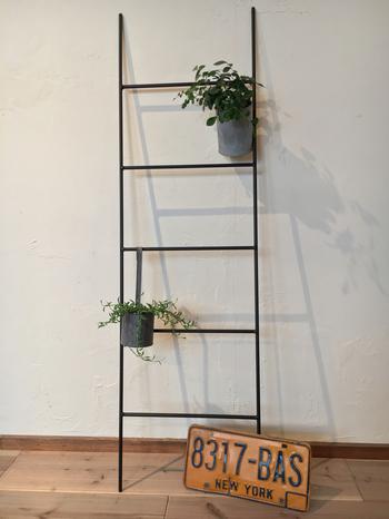 二段に渡って鉢植えを吊るしています。ハンギングラックにシンプルなグリーンをアレンジすると、すっきりとした緑のインテリアになりますね。