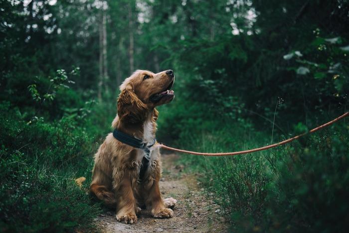 一方、犬の場合は虫除けとして使っても大丈夫。ただし、先程ご紹介したレシピではハッカ油が濃すぎるので、ハッカ油の量を10~20滴に変更して作りましょう。目の周りを避け、体全体にスプレーするのがポイントです。