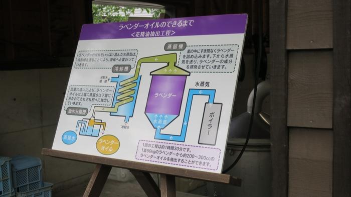 ファーム内には、日本唯一のラベンダーオイル抽出工場である「蒸留の舎(いえ)」も。  7月上旬~8月中旬くらいの10~17時ごろにしか作業されないので、シーズン中に立ち寄れたなら、ぜひ見学するのがオススメです。ふわりと広がるラベンダーの香りに感動と癒しを感じられること、間違いなしですよ。