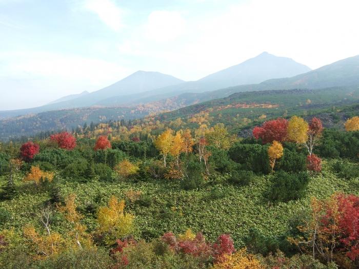 溶岩流の跡が印象的な十勝岳とコントラストをなす、裾野に広がる美しい紅葉たちは、圧巻です。  日当たりによってだいぶ印象が変わるので、一番のオススメは晴天の午後。あまり早すぎる時間や夕方には、逆光や日陰になりやすいのでご注意を・・・。