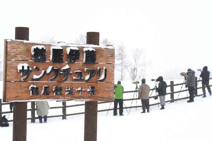 村内の「鶴居・伊藤タンチョウサンクチュアリ」には、12月下旬~1月初旬のピーク時には、400羽ほどのタンチョウがやってくるとのこと!
