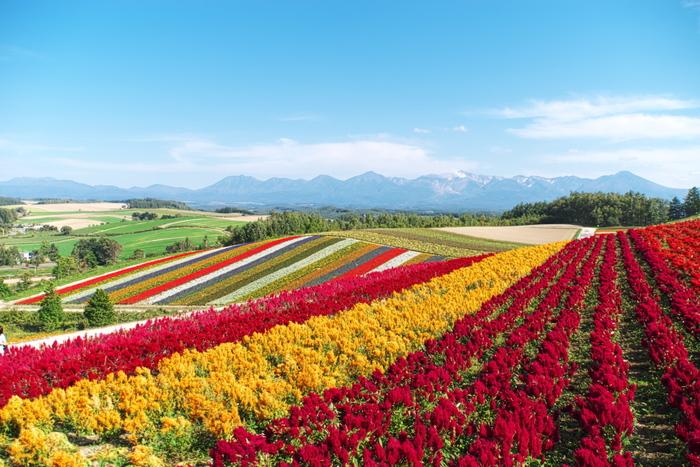 「北海道」と聞いてパッと思い浮かぶのは、豊かな自然風景。  春は壮大な花畑を楽しめて、夏は避暑地に。秋は紅葉の雄大な景色、そしてなんといっても冬は、幻想的な雪景色・・・。季節ごとにここまで違った表情を見せてくれる場所は、なかなか見当たらないのではないでしょうか。