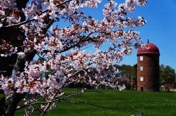 長い冬を終えやってくるのは、北海道の「短い春」。待っていました!とばかりに、花々の蕾が次々と緩む時期です。  じーっと寒さに耐えていた花たちは、まさに怒涛の開花ラッシュとでもいうべき勢いで北海道の隅々を色とりどりに彩ります。  本州では数カ月かけて種類ごとに少しずつ移り変わる花の開花も、北海道では一度に楽しむことができることが多いんですよ。
