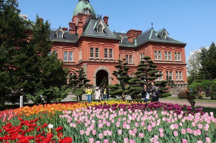 そして、大通公園でお花を楽しんだなら・・・あわせて、赤れんがの北海道庁旧本庁舎にも足を運んでみては。  こちらでも同じ時期に、このようなチューリップの風景を楽しめますよ。国重要文化財との美しい競演を背景に、記念写真を撮ってはいかがでしょう。