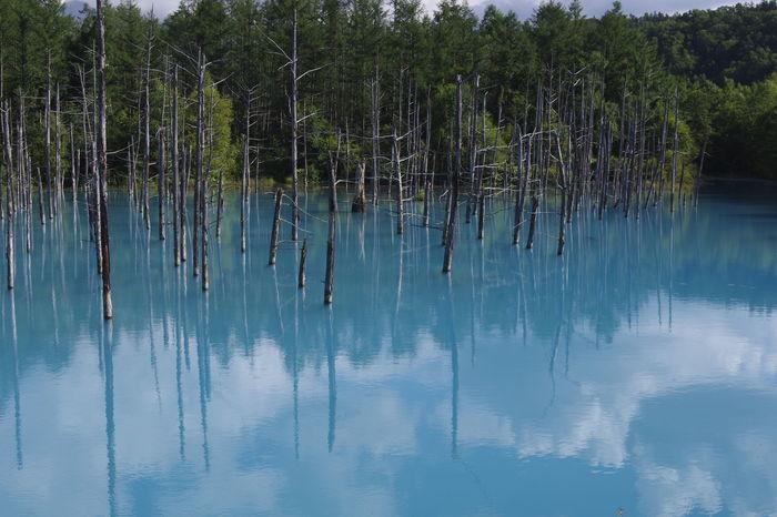またエリア的に、十勝岳温泉や人気上昇中の美瑛の観光地・青い池と組み合わせた旅程が組みやすいのも、嬉しいところ。ぜひあわせて旅行プランに組み込んでみてはいかがでしょう。  紅葉狩りだけではなくいろいろなスポットを巡りたい!という欲張り派にぜひオススメな絶景スポットですよ。