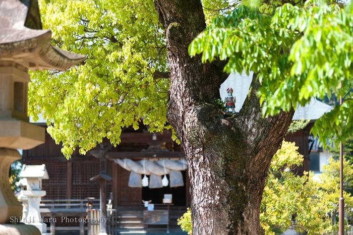 ●宇美神社 縁結びにご利益のある神社でもありますが、全国でも珍しい『縁切り』を願うスポットとしても有名。 その由縁は、事解男命(ことさかのおのみこと)が祀られていることによります。黄泉の国の神話は、皆さんご存知ですよね。日本の国土を生んでくださった伊邪那岐命(いざなぎのみこと)と、伊邪那美命(いざなみのみこと)のご夫婦の物語です。 亡くなった妻・伊邪那美命に会いたい一心で黄泉の国へ行った伊邪那岐命ですが、すでに黄泉の国の者になってしまった伊邪那美命と黄泉平坂で永遠の別れをすることになります。そこを掃き清めると、お生まれになったのが事解男命。コトサカとは、関係を裂くという意味。関係を絶ち、それぞれが新しい道を歩むことの象徴となる神様です。 男女の縁だけでなく、性格や病気、借金、ギャンブル、職場の問題など、あらゆる断ち切りたい縁に効果があるそう。