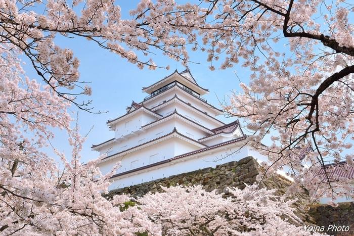 お城の中には約1000本のソメイヨシノ、枝垂桜、彼岸桜が植えられており、桜の季節には多くの人が訪れる桜の名所でもあるので、春の季節に訪れるのもおすすめです。