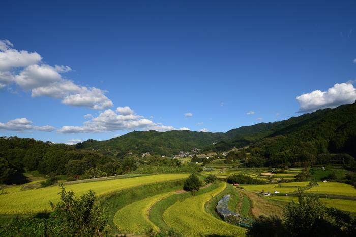 奈良県明日香村に位置する稲渕の棚田は、平安時代から室町時代にかけて開墾された棚田です。