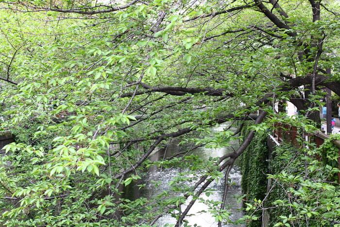 【中目黒さんぽ】の新しい目玉は世界5番目の「スタバ」?木洩れ日の目黒川沿いで寄りたい店・場所9選