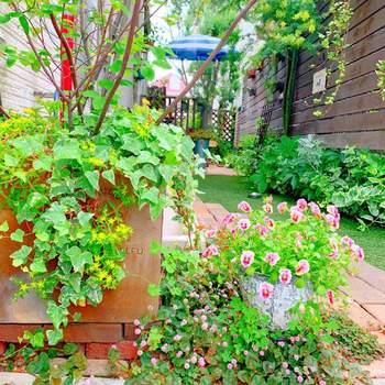 雨の間にグングン成長した雑草は、晴れの日に抜いておきたいですね。また、花がらを摘み取ったり、剪定したりしてきれいな形に整えてあげましょう。