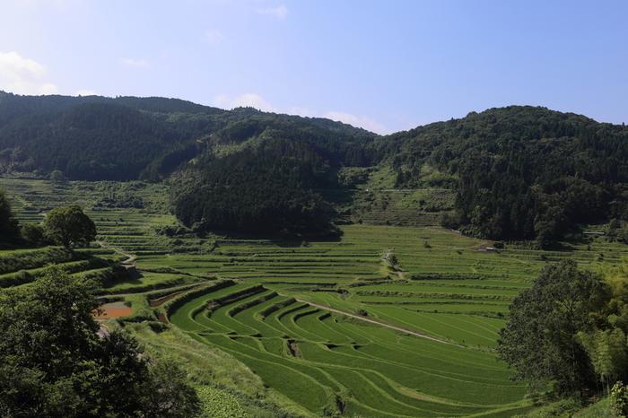 豊かな緑に包まれた谷間に、幾重にも棚田が折り重なる様は私たちが思い描く「日本の原風景」そのもので、どこか懐かしい佇まいをしています。