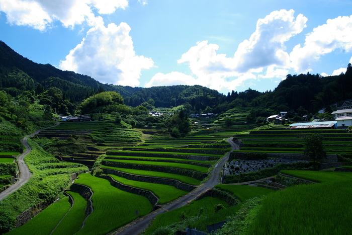 「日本の棚田百選」のほか、「広島県環境づくり大賞」を受賞し、CNNの「Japan's 34 most beautiful places(日本の最も美しい風景34選)」選定されている井仁の棚田は、12.7ヘクタールの耕作地に324枚の水田が敷かれた棚田です。
