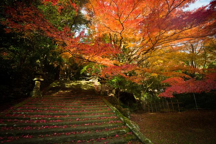 紅葉の名所として名高い古刹。枝が細く長く伸び渡り、小さな葉をつける「いろはもみじ」が境内を真っ赤に染め、幻想的な風景を生み出します。飛鳥時代の推古2年(594年)、信濃国の智春上人が滝のほとりで修行をしている時に仏器を滝壺に落としてしまったところ、鰐(わにざめ)がエラに掛けて奉げたことから名づけられた鰐淵寺。滝に鰐が出る古代とは、何ともロマンを感じる時代ですね。