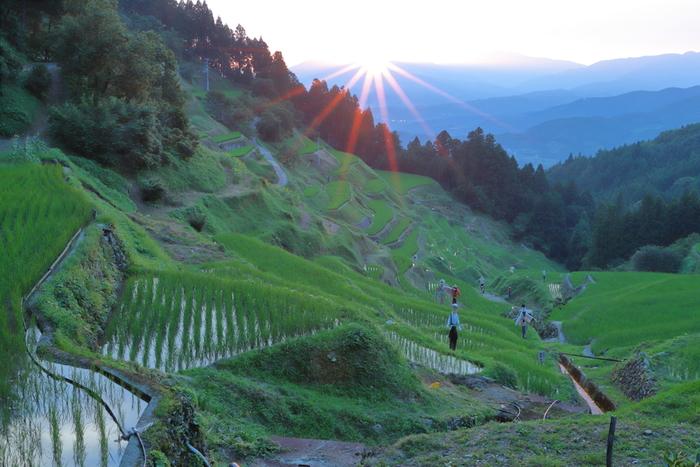 泉谷の棚田では棚田オーナー制度が設けられており、田植え、稲刈りといった農業体験を楽しむことができます。秋には、収穫されたお米30kgを持ち帰ることもできます。