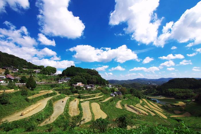 88ヘクタールの耕作地に約2700枚の水田が敷かれている北庄の棚田は、「日本棚田百選」最大の面積を誇る棚田です。抜けるような青空と、谷・尾根に広がる棚田が織りなす景色は、まるで絵画のような素晴らしさです。