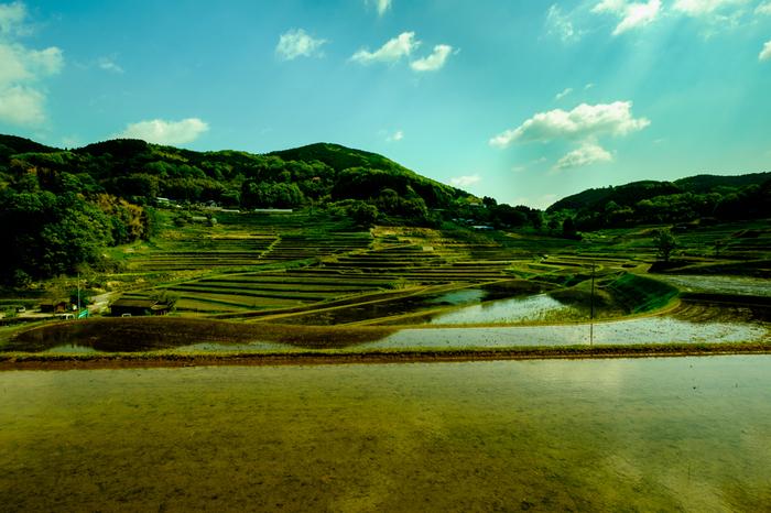 水鏡ができる初夏の植付時季、深緑に染まる盛夏、稲穂が黄金色に輝く秋、棚田が雪化粧をする冬など、大垪和西の棚田では四季折々で美しい風景を眺めることができます。
