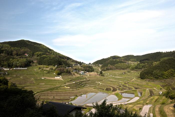 大垪和西の棚田には、約850枚の水田が敷かれています。岡山県美咲町に位置する標高400メートルの谷全体が棚田となっており、360度のすり鉢状に棚田が広がる様は圧巻です。