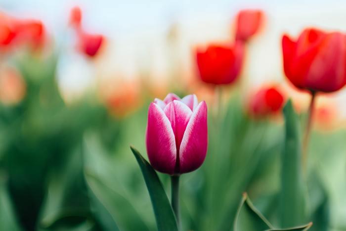あなたの思い浮かべる「素敵な人」は、どんな人でしょうか?具体的な人物がいる場合も、いないときも、思い浮かべるのは、「派手ではないのに、その人がいるだけでぱっと花が咲いているような」そんな魅力的な人ではないかと思います。