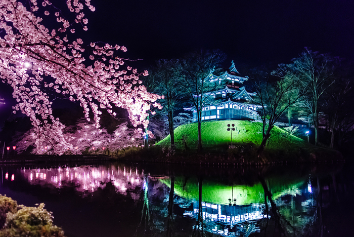夜になると、この4000本もの桜のライトアップを楽しめるのも、ここならでは。  日没から21時(最盛期には22時)までの時間、ピンク色の桜の木々が、高田城と共に、一斉に鮮やかに光照らされます。 お堀の水面に、高田城と桜がまるで鏡のように反射する様子も、美しいですよね。