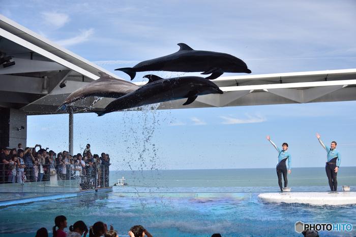 上越市に行くなら、併せて立ち寄りたいのが、「上越市立水族博物館うみがたり」。 まちとつながり、「ものがたり」のある水族館を、というコンセプトのもと、2018年6月にリニューアルオープンしました。  空と日本海、大きな水槽がひとつながりに一望できる光景は、開放感いっぱいです。