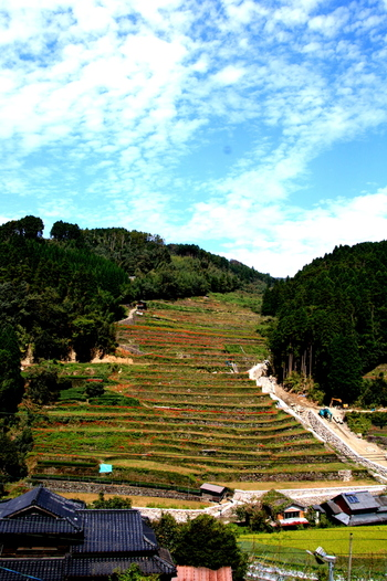 広内・上原棚田は、「日本で最も美しい村連合」に加盟している福岡県八女市星野村に位置する棚田です。標高差230メートルに及ぶ約12.6ヘクタールの急勾配には425枚の水田が敷かれています。広内・上原棚田は、星野村の中でも最も美しい場所の一つとされており、山一面に造られた広大な階段のようです。