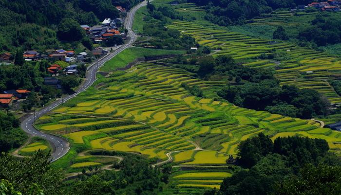 大浦の棚田は玄界灘に突き出た半島に位置する石積みの棚田で、高低差100メートルほどの耕作地約30ヘクタールに約1000枚以上もの水田が敷かれています。棚田の歴史は古く、その開墾は鎌倉時代から江戸時代に遡ると伝えられています。