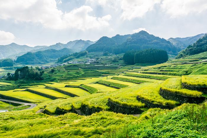 長崎県波佐見町に位置する鬼木棚田は九州百名山の一つに数えられる虚空蔵山麓に広がる棚田です。整然と積まれた石堤と緑色に輝く稲が見事に調和した風景は、私たちが思い描く日本の原風景そのものです。