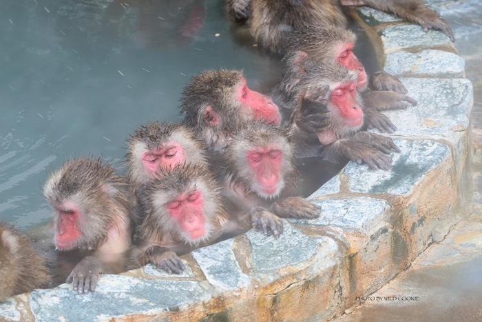 観光で函館に行く人も多いはず。夜景のきれいなホテルに泊まるのもいいけれど、せっかくなら市内にある温泉へ足を伸ばしてみましょう。松前藩主や榎本武揚も体を癒したという名湯で、サルが入浴する温泉としても知られています。  ♨ 泉質:ナトリウム塩化物泉、カルシウム塩化物泉、無色透明 ♨ 適応症:冷え性、リュウマチなど