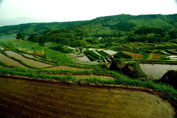 温泉で有名な大分県別府市に位置する内成棚田は42ヘクタールの耕作地に約1000枚の水田が敷かれている棚田です。