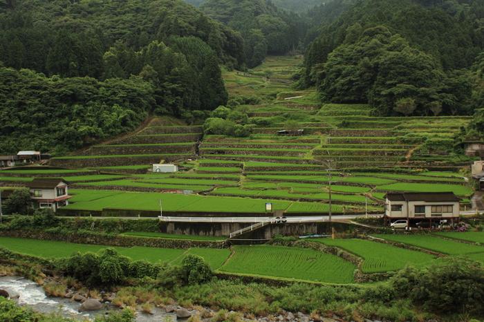 熊本県球磨村一勝地に位置する鬼の口棚田は、球磨村のレジャー施設「一勝地温泉かわせみ」の近くにある棚田です。丸みを帯びた石が複雑に積まれた石垣が特徴的な鬼の口棚田は、周囲ののどかな農村風景と見事に融和しています。