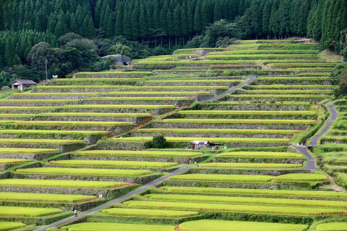 標高988.8メートルを誇る、宮崎県日南市最高峰の小松山南裾野に広がる坂元棚田は標高約200メートルの高原に位置する棚田です。整然と積まれた石垣が連なる坂元棚田は、遠望すると、まるで巨大な階段のようです。