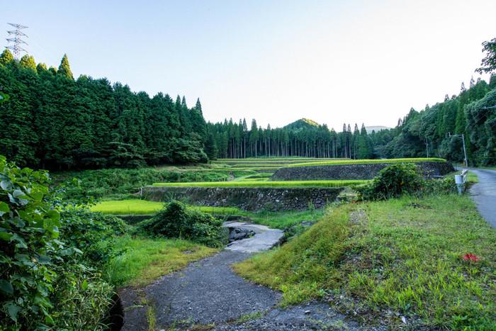 幸田棚田は、日本三百名山の一つに選定されている標高1739メートルを誇る国見岳麓・平均標高約339メートルの高原に広がる棚田です。約9.5ヘクタールの耕作地には102枚の水田が敷かれています。