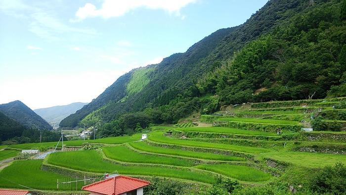番所棚田がある熊本県山鹿市番所地区は、八方ヶ岳、国見山といった1000メートル級の山々が連なる筑肥山地の南端に位置しています。現在でも、先人たちの苦労の結晶として残されている古い石垣が棚田の景観美を引き立てています。