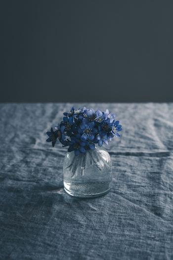 モヤモヤと気分が乗らない、前に向かない自分を押し出してくれるようなちからを秘めています。風水学的にも花を飾ることはとても良いと言われていますし、観葉植物を置くことは空気の浄化作用になるので健康にもとても良いのです。