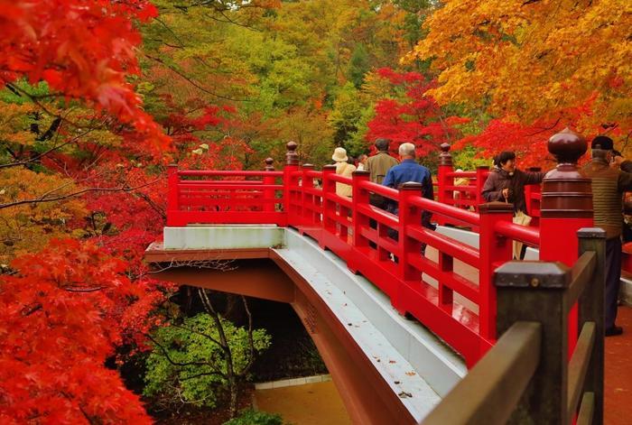 弥彦駅に隣接するこの公園は、花菖蒲園や水芭蕉園など、季節の花々を見に、たくさんの観光客が訪れます。 なかでも、秋は、赤や黄、だいだいなど色鮮やかに染まった紅葉が大人気。入園無料で、いつでも入ることができます。