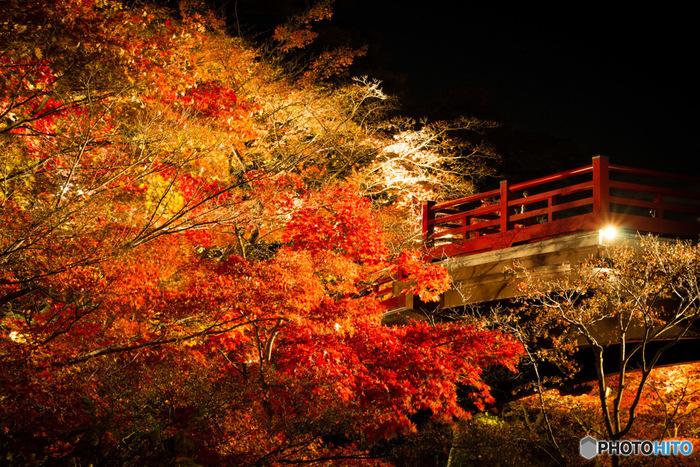 弥彦公園では、紅葉の最盛期になると、夜にライトアップイベントが行われます。  照明に照らされた色とりどりの葉は、夜空とのコントラストが際立ち、昼間に見る紅葉とはまた違う美しさがあります。 このエリアの紅葉を更に堪能するなら、弥彦山ロープウェイや、約14kmに渡るドライブコース・弥彦山スカイラインから眺めるのもおすすめですよ。