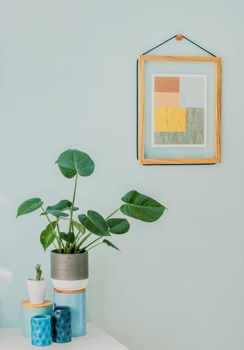 青々とした広葉樹やサボテンなど、夏をイメージさせる観葉植物も置いてみましょう。  お部屋の広さに余裕があれば、大きなプランターなどで育ててみてお部屋にインパクトを与えるのもおすすめ。  一気にお部屋が華やぐだけでなく、よりダイナミックな生命力を感じることもできます♪