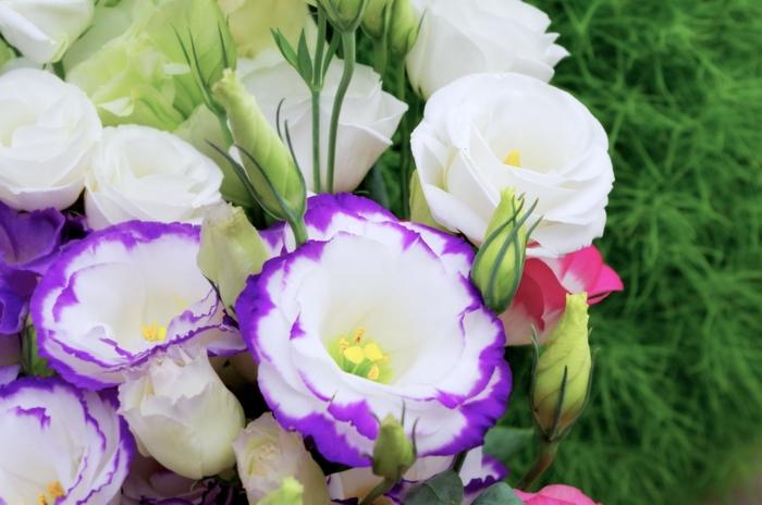 夏が旬のトルコキキョウ。一重から八重咲き、フリル咲きなど形も色も様々で、メインの花材にしてもサブにしても、仕上げたい雰囲気に合わせて選ぶことができます。茎が腐りにくく花もちも良く、夏でも約2週間楽しめます。茎の節部分でカットしてしまうと水の吸い上げが悪くなるので、節は避けて切るようにしてくださいね。