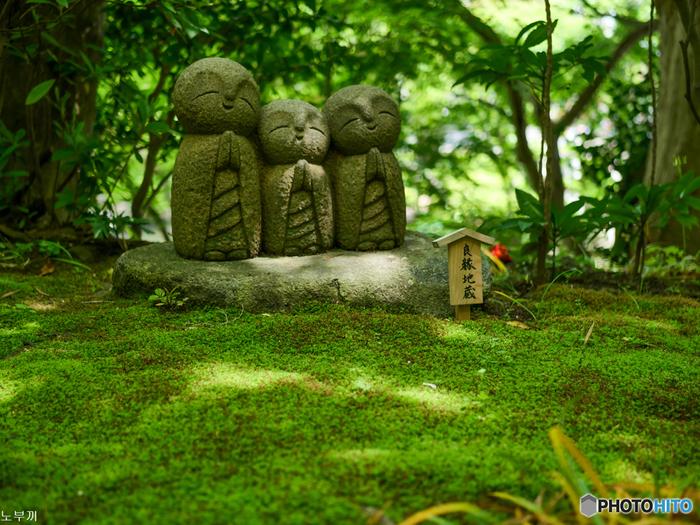 鎌倉にある長谷寺は、一年を通して絶えず美しい花が楽しめることから、「鎌倉の西方極楽浄土」と呼ばれています。中でも紫陽花は有名で、シーズン中には多くの人が訪れる人気の鑑賞スポットです。
